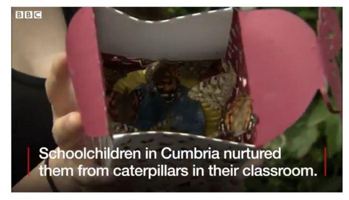 Schoolchidren release butterflies BBC