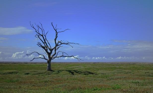 tree-2649411_960_720