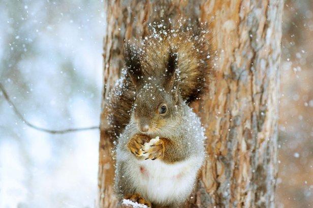 squirrel-4700919_1280